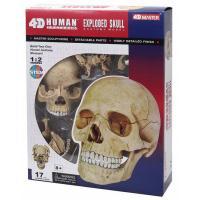 Пазл 4D Master Объемная анатомическая модель Череп человека Фото